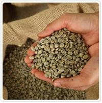 estratto naturale di caffè verde per perdere peso