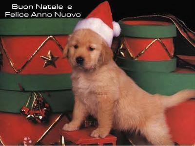 Cartolina Natalizia: Auguri (Cane)