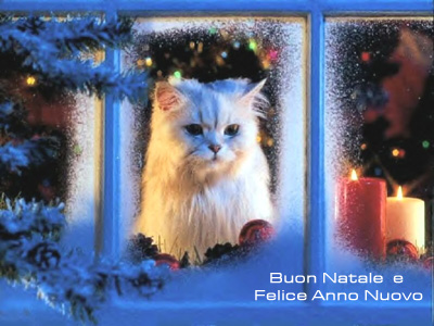 Cartolina Natalizia: Auguri (Gatto)