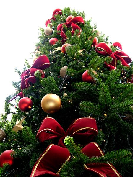 Foto Natalizie - Albero di Natale