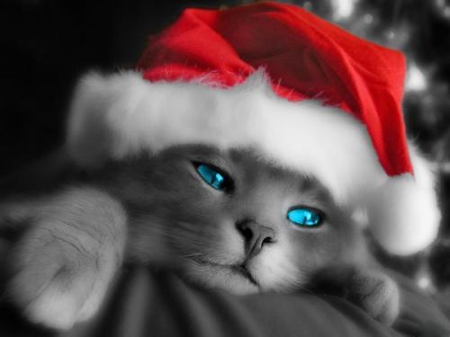 Immagini di Natale - Gatto